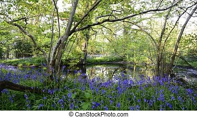 Bluebell Woods - A pond in bluebell woods