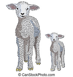 Baby lamb vector - Hand drawn baby lamb standing