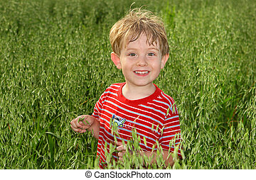 A boy standing in a field of Oats - a young boy standing in...