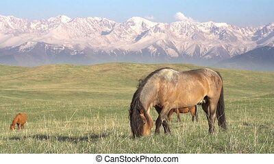 Horse on a hilly pasture - Small herd Grazing on a Beautiful...