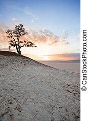 Shaman tree of lake Baikal