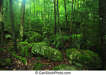 green forest - rocks covered by moss in green forest