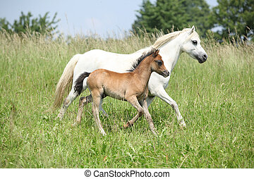 Mare with foal on pasturage