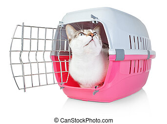Pet cat in a cage for transport with door open He looks up