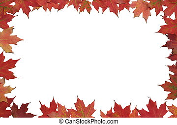 Red maple leaf poster or card - Red maple leaves surrounding...