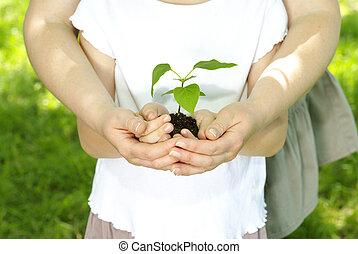 mano, planta
