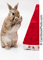funny Rabbit - Funny Rabbit wearing a christmas hat