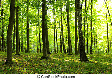 Forest - A rural road through a forest full of trees.