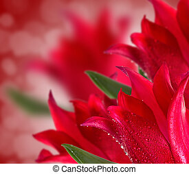 Red tulips background with bokeh effect