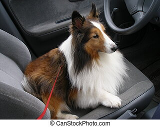 Driver Seat - Dog sitting in the driver seat as usual
