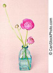 Ranunculus flowers in a vase on vintage background - Pink...