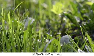 Close-up of dew drops on green gras