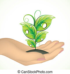Hand and a plant. Vector