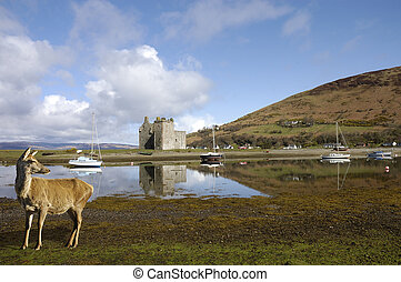 Castle at Lochranza in Scotland - Castle ruins at Lochranza...