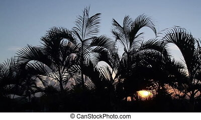 silhouette of palm trees gently blowing in the wind at...