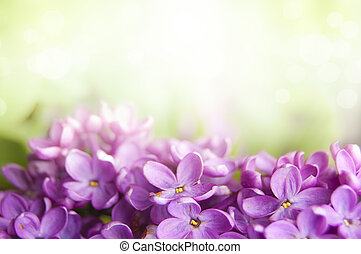 Spring lilac flower background - Spring lilac blossom on...
