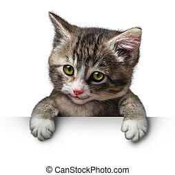 Cat Kitten Blank Sign - Cat or kitten holding a horizontal...