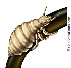 Hair Lice Louse - Hair lice louse parasite on a single...