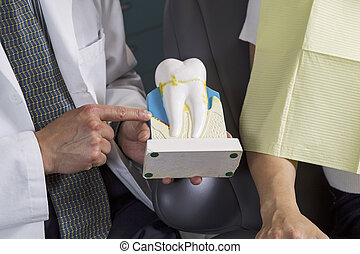Dentist showing patient how to care for teeth with display -...