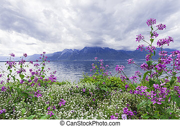 Flowers against mountains, Montreux. Switzerland - Flowers...