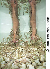 Fish spa feet pedicure skin care treatment with the fish...