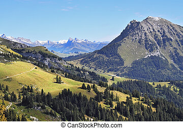 The pine forests on the mountain slopes - Green meadows and...