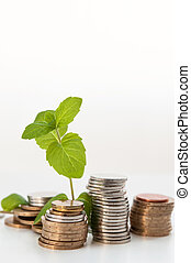 coin money with green plant growing, financial concept