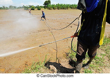farmer spray pesticide on the rice field