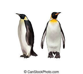 King Penguin, Gentoo and emperor penguin, Isolated on white