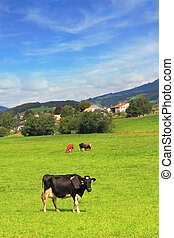 Charming pastoral scene in Southern France. Green meadow...