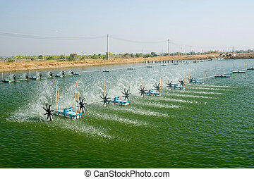 Shrimp Farm near bangkok, Thailand.