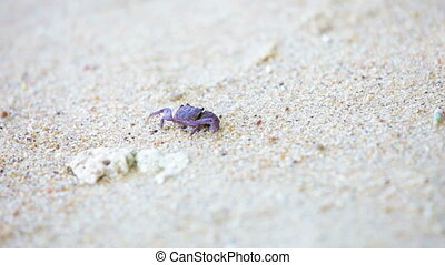 Small dark crab on white sand