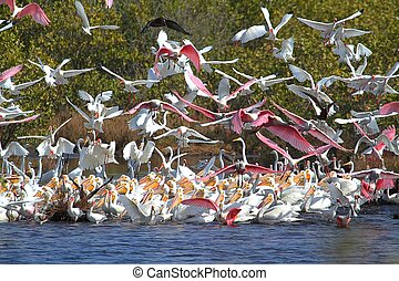 Large Flock of Water Birds Feeding in the Florida Everglades