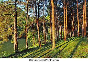 Light aircraft, Pang Ung Forestry Plantations, Maehongson...