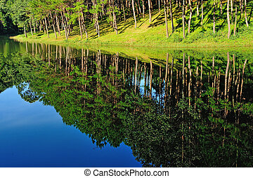 Reflection of lake in Pang Ung Forestry Plantations,...