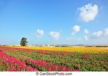Spring in Israel. Wonderful scenic fields blooming with...