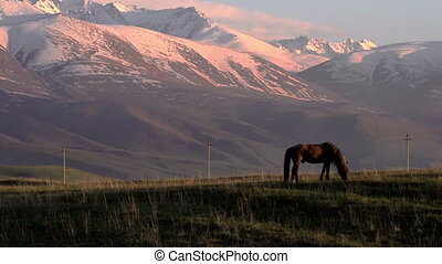 Horses Country - Beautiful horse on a background of...