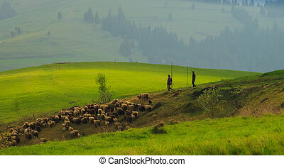 Spring morning rural landscape in the Carpathian mountains with a herd of sheep on the emerald lawn