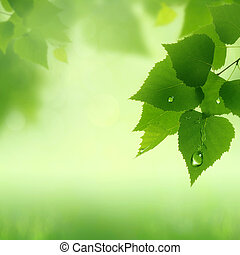 Fresh dew on the foliage, abstract natural backgrounds