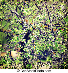 background-4 - vintage flower background