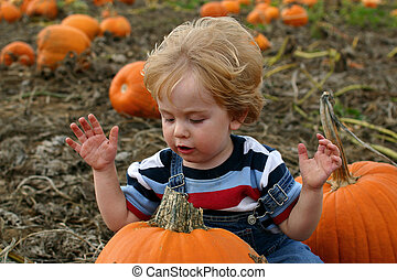 The end of the search - a toddler looks at a pumpkin in a...