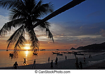 Palm tree over lagoon with boats at sunset. Koh Tao island, Thailand