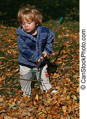 Raking Leaves - Preschool boy helping with yard work by...