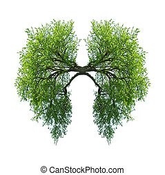 lungs - green tree lungs isolated on white