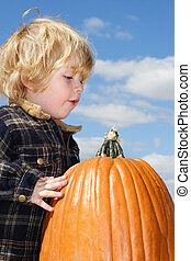 Pumpkin Found - Young boy looking over the pumpkin that he...