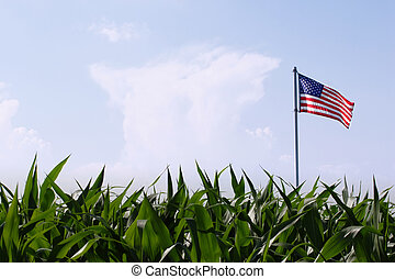 Land of Plenty - an American flag flies over a field of corn...