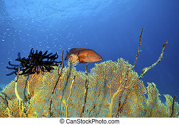 Beautiful colorful soft coral with red cod, Similan,...