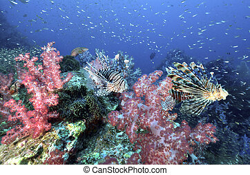 Beautiful colorful soft coral with lionfish, Similan,...