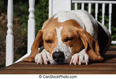 A dogs life - A sleeping dog lays on the porch of a house in...