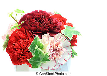 carnation - I took many carnations in a white background.
